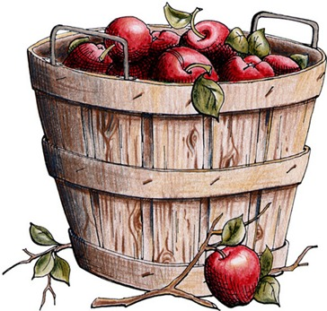 bushel basket of ripe red apples